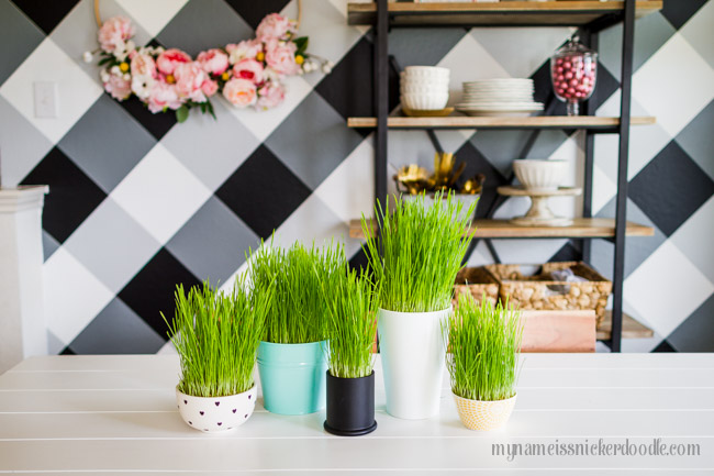 Decorative Grass | Easter | How To Grow Grass | Decor Tutorial | Easter Decor
