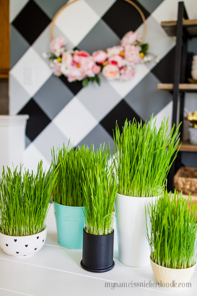 Decorative real grass in a jars on a white table